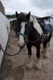 Reen Manor Riding Stables, Cornwall